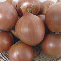 onions - history, production, trade