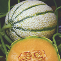 melons - history, production, trade